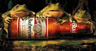 Bud frogs.jpg